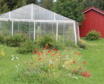 veksthus på lizas småbruk