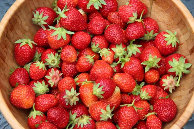 Jordbærdyrking