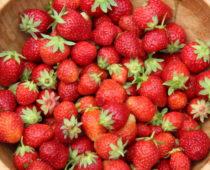 jodbær