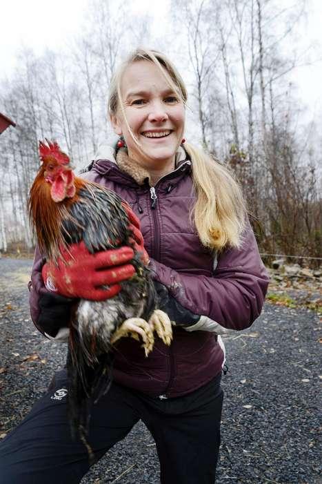 Artikkel i avisen 'Nationen' om hønseslakt kurs 02.12.2015