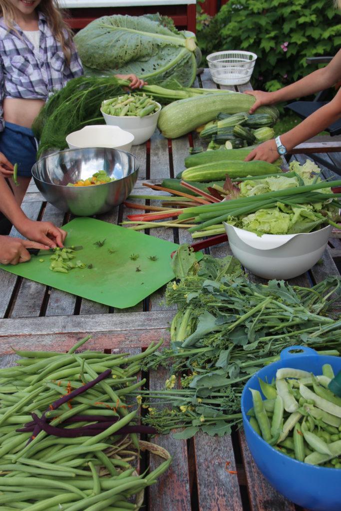 Lizas Småbruk innhøsting kjøkkenhagen grønnsaker kurs matproduksjon