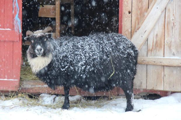 Vinteren har kommet!