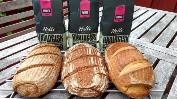 Emmermel – gamle norske kornsorter