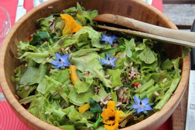 Salatdyrking – kjøkkenhage for utålmodige gartnere