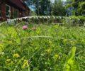 Vi lar gresset stå og dyrker insekter & bier!