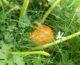Gresskarsuppe – oppskrift