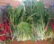 Spinat, bladbete, pakchoi og andre bladgrønnsaker
